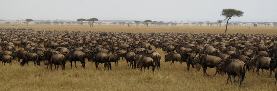 Northern Tanzania